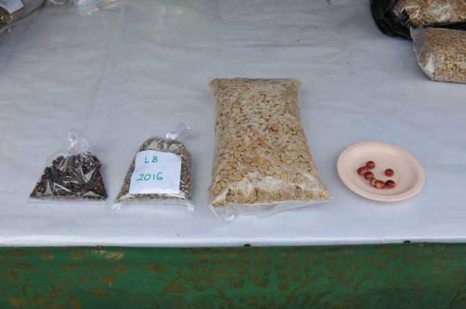 빨간 커피 체리(오른쪽 첫번째)를 수확해 숙성 시킨 뒤 씨앗을 분리한다(오른쪽 두 번째). 건조된 '생두'(오른쪽 세번째)를 로스팅 하면 우리가 즐겨 마시는 '원두'가 된다.  - 발리=김규태 기자 제공